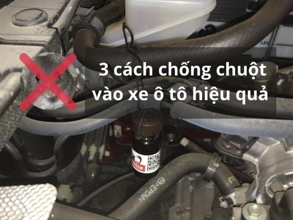 3 cách chống chuột vào xe ô tô hiệu quả không thể bỏ qua